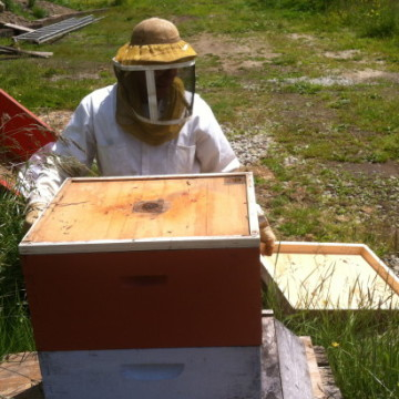 Beginning Bee Keeping Class