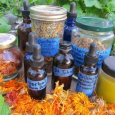 Medicine from the Garden -- Teas, tinctures, salves, potpourris