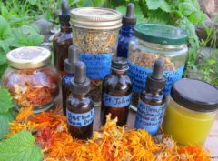 The Medicine Cabinet in Your Back Yard