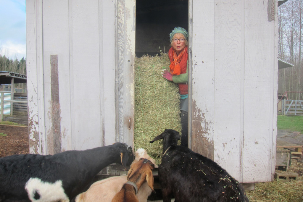 biondo alfalfa