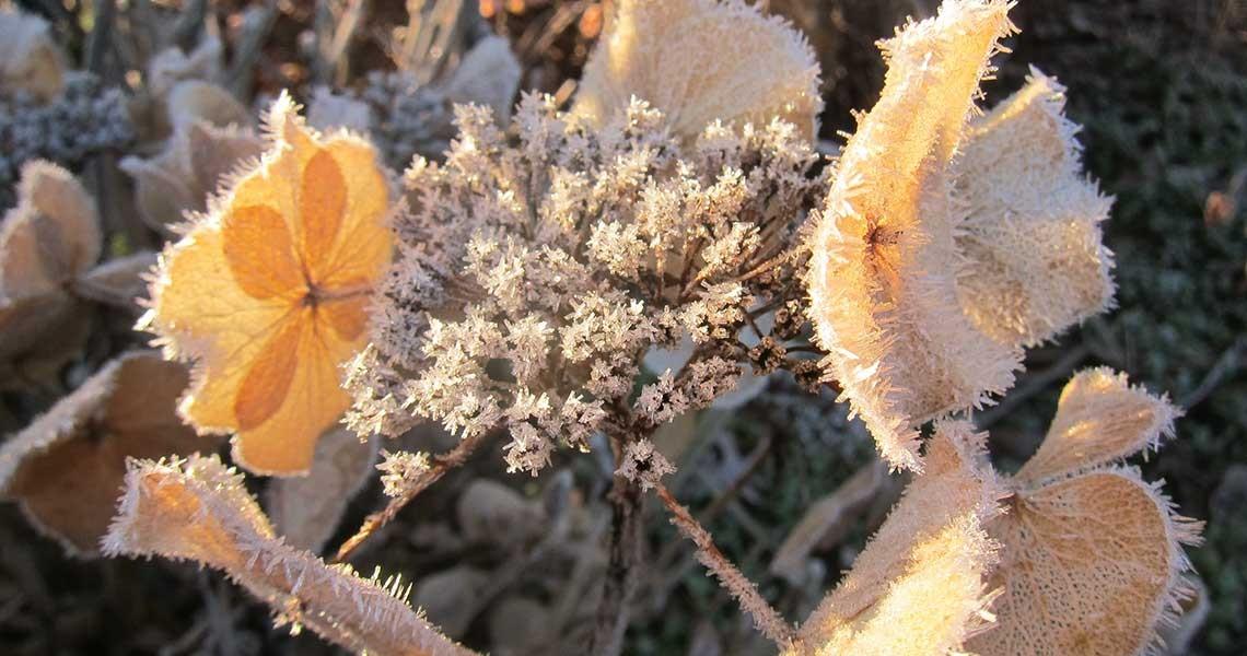 Winter Sunlight through Dried Flowers