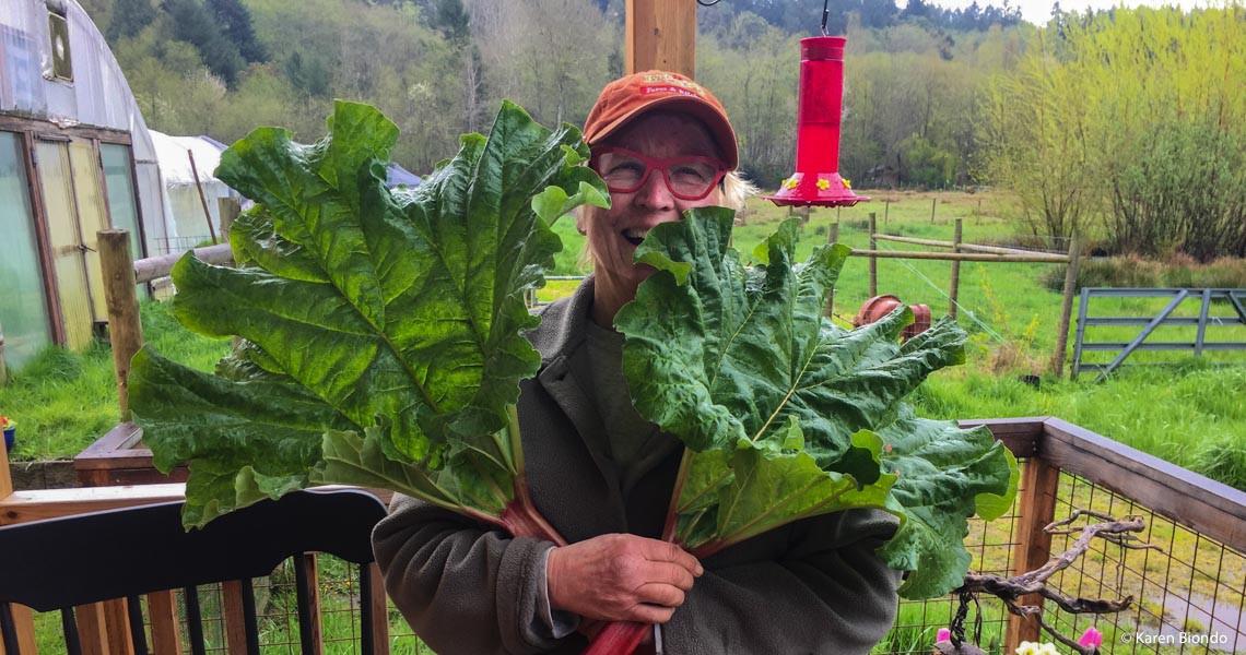 Mondo Rhubarb