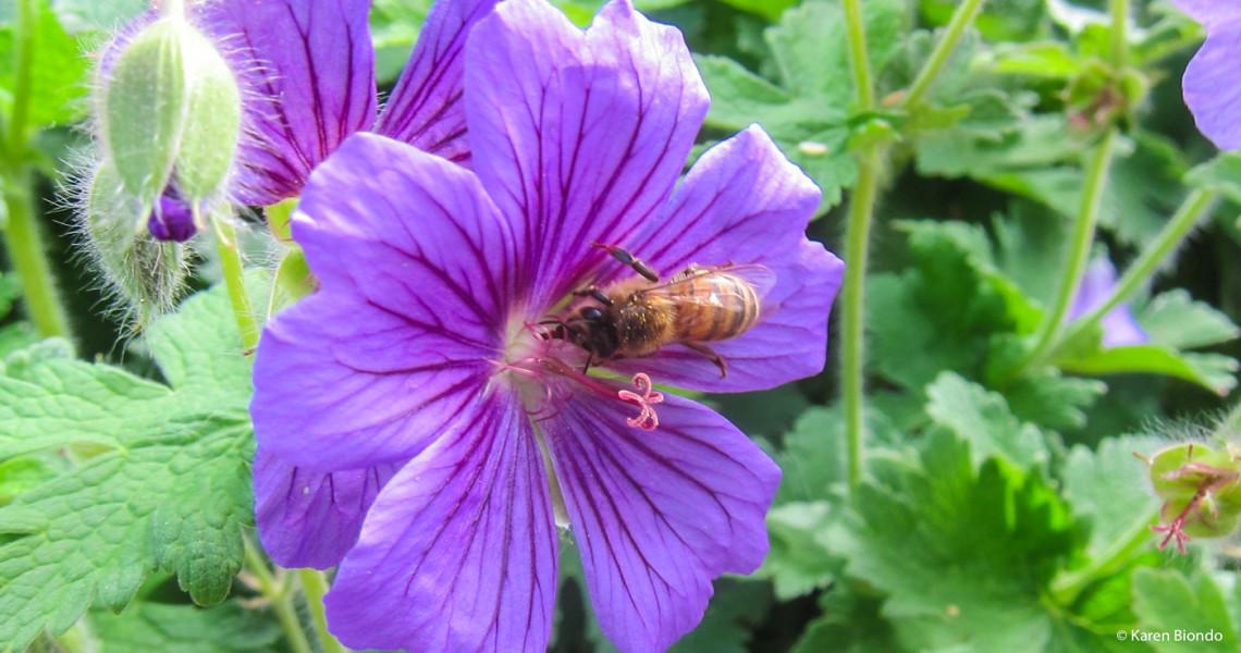Honey Bees Hard at Work