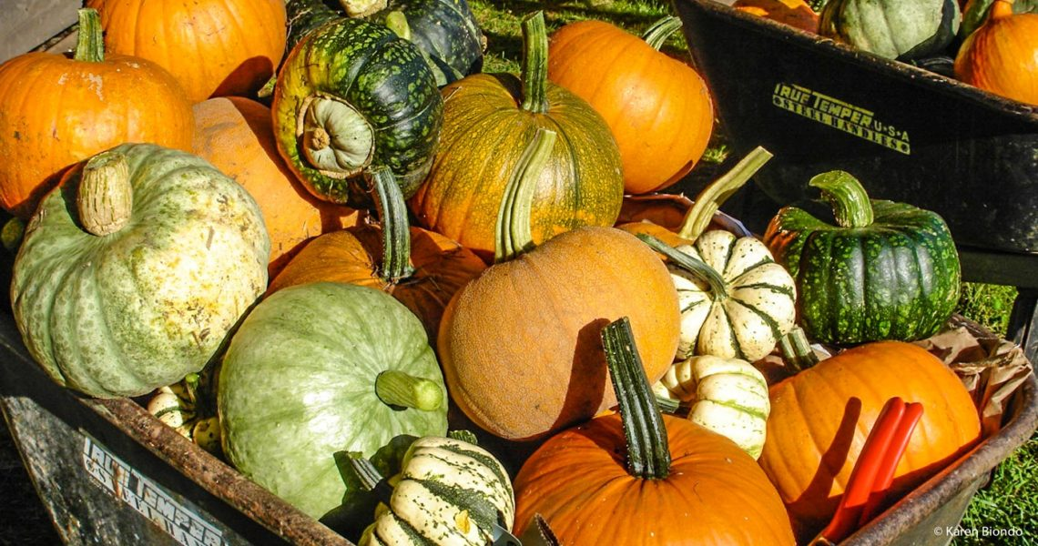 Pumpkins and Squash from Fall Harvest