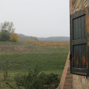 Vineyard at Agritourismo