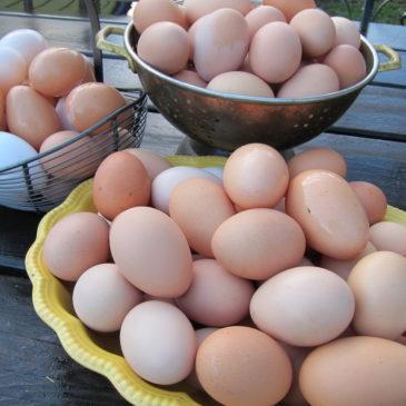 Egg o nomics 2018