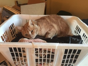 Joon folding laundry